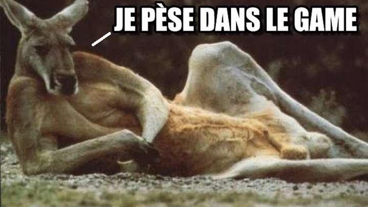 kangourou-pese-dans-le-game-tl-jpg